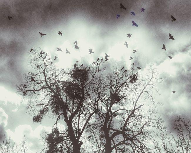 Urban birds 😉