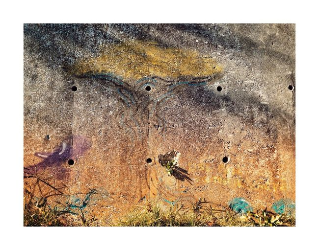 Abstraction II Outdoors Textured  Animal Themes No People Day Close-up Nature Bird Wall Art