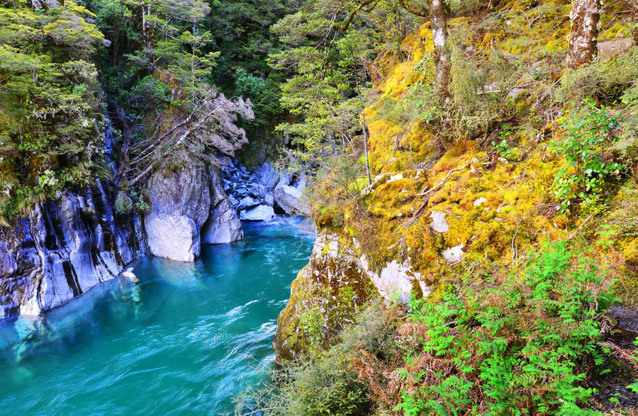 The Blue Pools of Haast Pass in New Zealand Haast Pass Beauty In Nature Blue Pools Day Forest Green Color Growth Idyllic Lush Foliage Nature Non-urban Scene Outdoors Plant Remote Rippled Rock - Object Rock Formation Scenics Tourism Tranquil Scene Tranquility Travel Destinations Tree Tree Trunk Water
