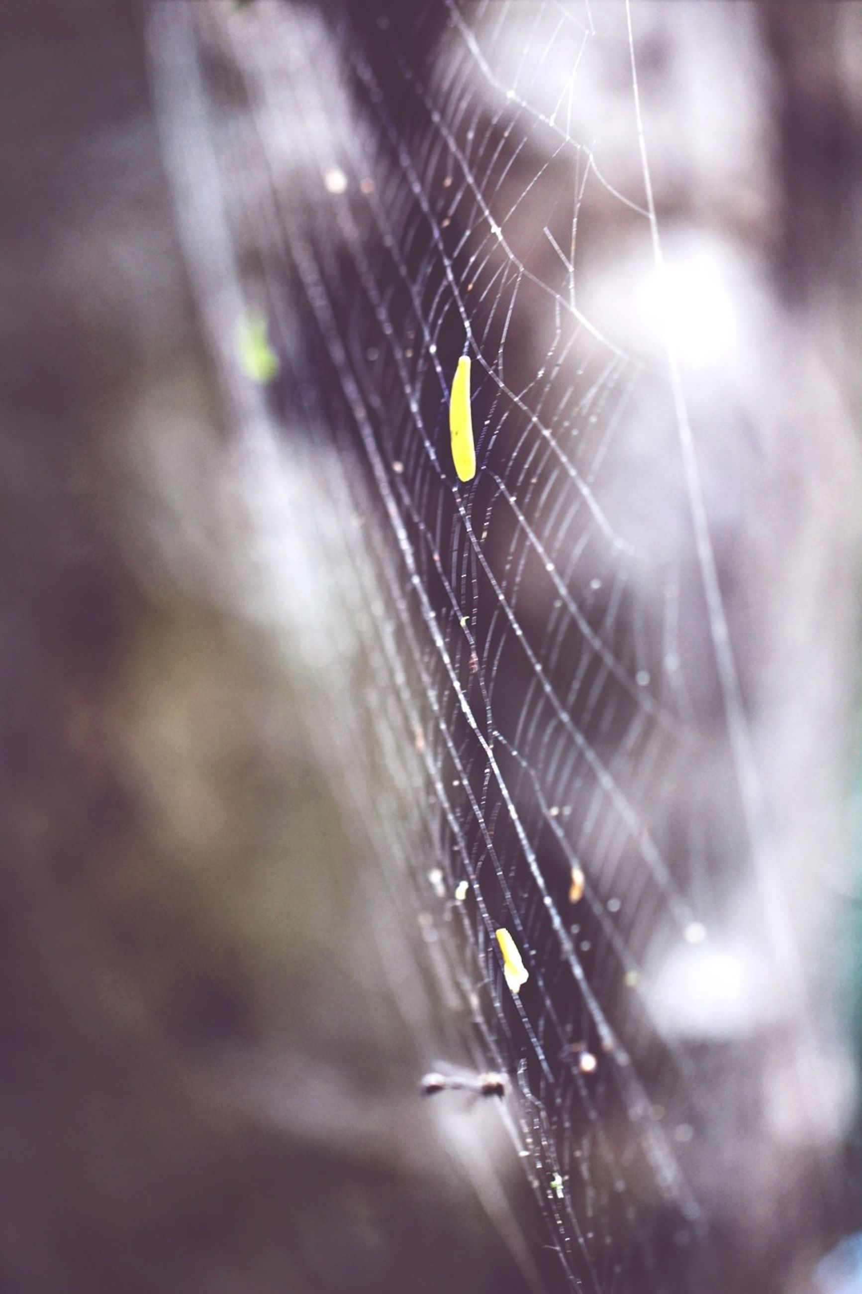 one animal, insect, animal themes, animals in the wild, wildlife, spider web, focus on foreground, spider, close-up, dragonfly, selective focus, nature, animal wing, full length, outdoors, zoology, day, no people, fragility, animal antenna