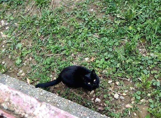 Black Nature One Animal Cat Eyes Cat Pet Animal Themes Outdoors Finding Blame Feeling Look Up Black Cat