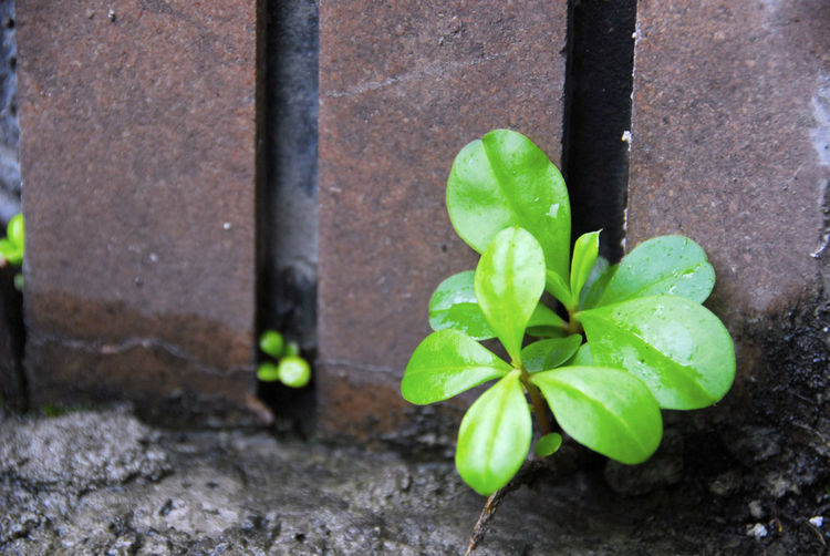 Vitality Close-up Day Fragility Freshness Green Color Growth Leaf Nature No People Outdoors Periwinkle Plant Vitality Color Vitality Of Water