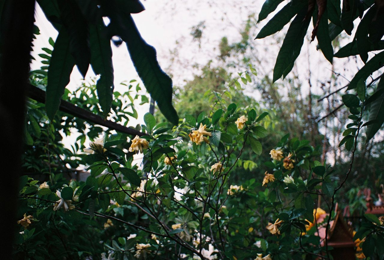 CLOSE-UP OF FLOWERING PLANTS AGAINST TREE