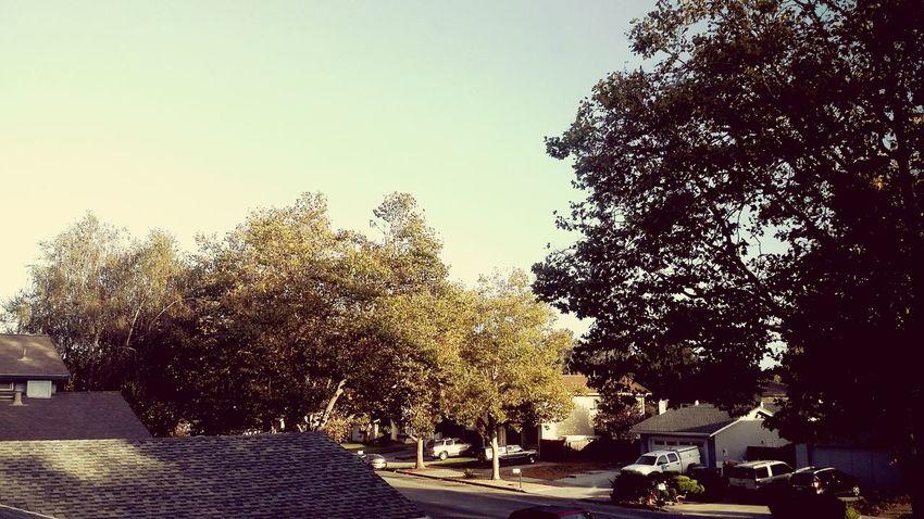 Fall Beauty Tree And Sky