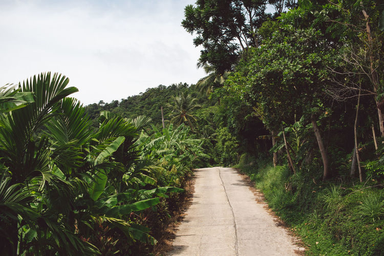 Plant Tree Growth Direction The Way Forward Green Color Nature Footpath Beauty In Nature Tranquility No People Sky Day Tranquil Scene Outdoors Diminishing Perspective Road Land Scenics - Nature Non-urban Scene Long
