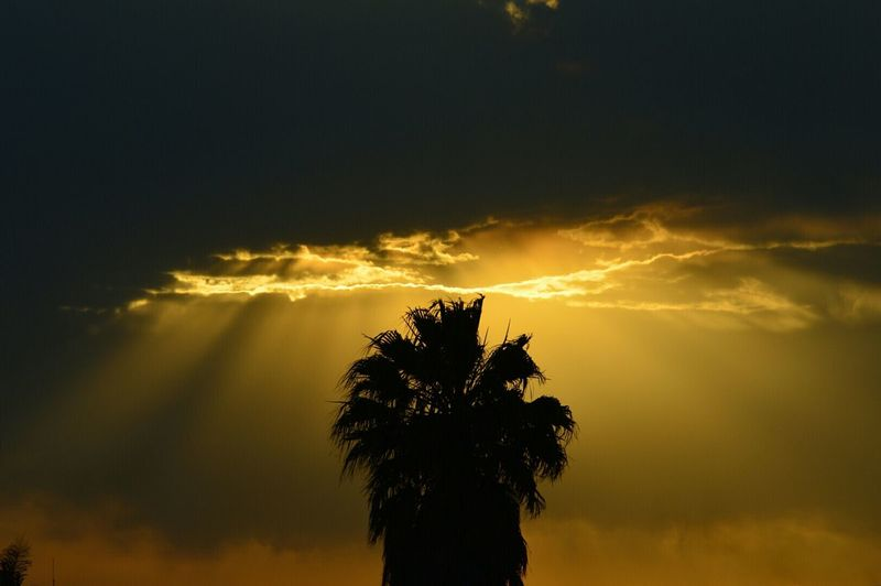Silhouette Palm Tree Against Sky During Sunset