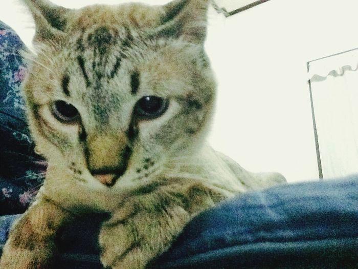 What? Cat Enjoying Life Cute Cats