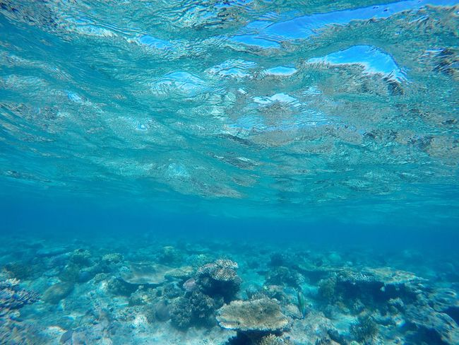 Water Blue Sea Underwater Nature Fish Swimming Beauty In Nature Tranquility Scenics UnderSea Tranquil Scene Turquoise Colored Full Frame Reef The Natural World Turquoise Outdoors Non-urban Scene Waterfront Australia Animals Seascape Traveling Backpacking