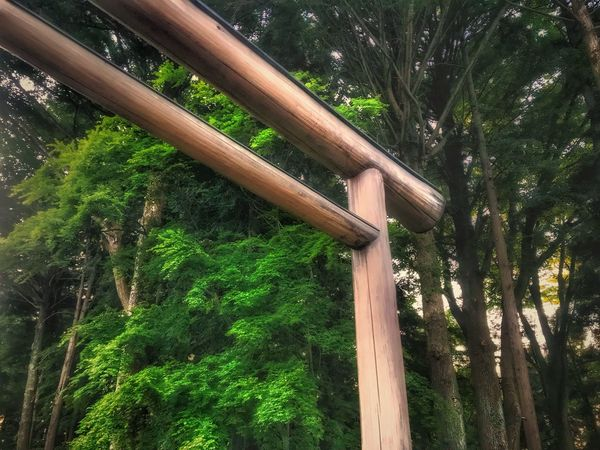 A Shrine Jinjya 鳥居 Plant Tree Growth Low Angle View Green Color No People Wood - Material