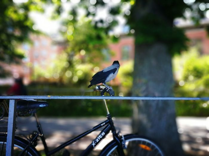 One Animal Bird Animal Wildlife Animals In The Wild Animal Themes Focus On Foreground EyeEm Best Shots EyeEmBestPics østerbro Artofvisuals København (copenhagen) Nature On Your Doorstep EyeEm Gallery Nature Travelgram Traveling Photography Biker Life Bird On Wire Are We There Yet?  Young Bird LearningEveryday Fly Away Yourebeautiful Move On Eyeem Outdoors