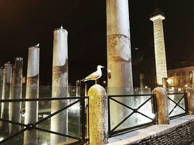 Rom Roma Venezia Piazza Piazzavenezia Italy Night Huawei P8 HuaweiP8 Makeitpossible Cities At Night