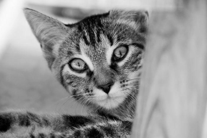 Animal Themes Blackandwhite Close-up Day Domestic Cat Feline First Eyeem Photo Followme Hello World Kitten Mammal Nature No People One Animal Outdoors Pets Portrait CDRE Cats