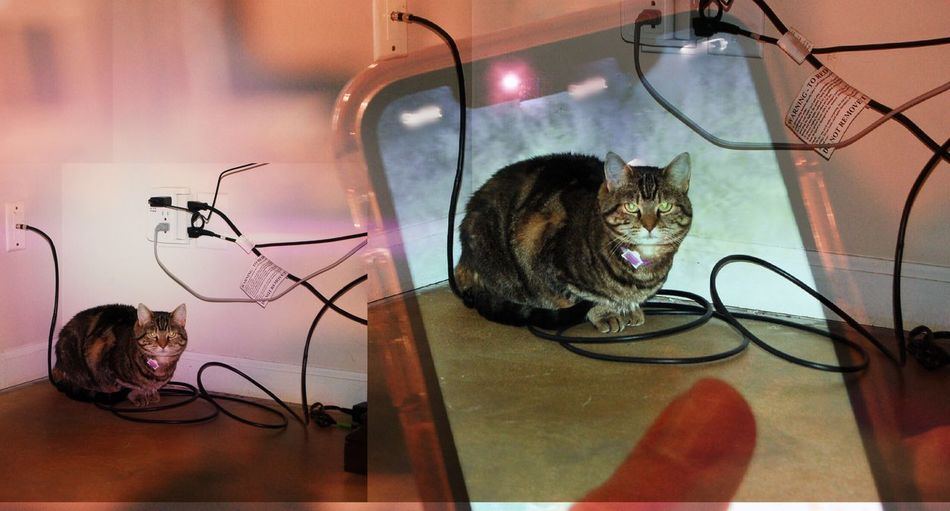 Wired Cat in 3D Cut The Cord Cable Telecommunication Ears Eyes Fur Modern Color Bright Wired Wireless Technology Wireless Communication Cat Feline Tabby Cat Wired Wires Photography Photo 3D Smart Phone Digital Screen Glass - Material No People Lighting Equipment Illuminated Hair Electricity
