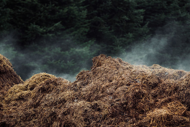 A WARM PLACE Rural Smoke Agriculture Beauty In Nature Day Fog Forest Hay Bale Manure Heap Nature No People Outdoors Rural Scene Tree Warm