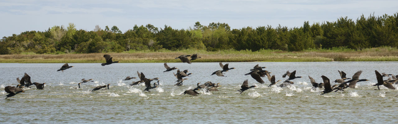 birds in flight Animal Themes Animals In The Wild Bird Birds In Flight Birds In Intracoastal Boat Life Large Group Of Animals No People Sea Birds Sony Lover