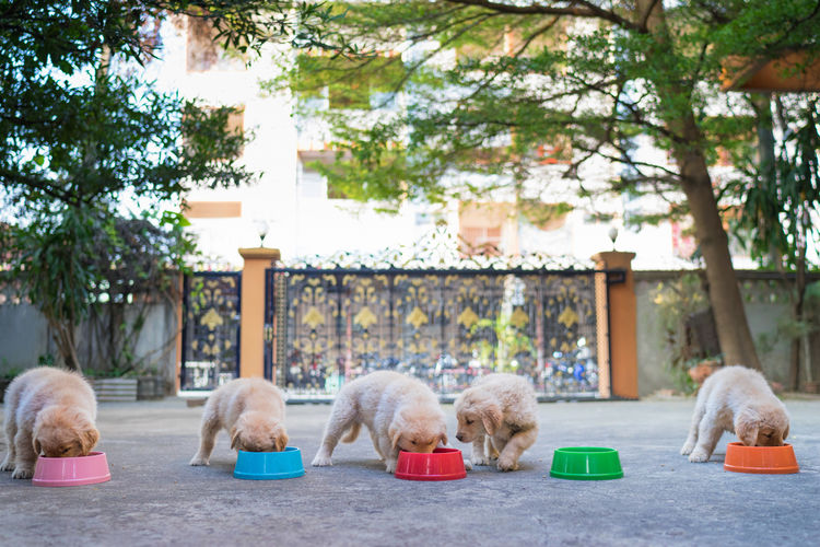 Dinner Time Bowl Colorful Cute Day Dinner Dinnertime Dogs Domestic Animals Golden Retriever Goldenretriever Mammal Outdoors Party Pets Pets Corner Puppies Puppy Relaxation Resting Retail  Sitting Surface Level Togetherness Tree Pet Portraits