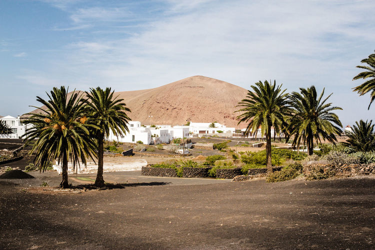 Botanical Landscape Atlantic Ocean Botanical Cactus Canary Islands Holiday Island Landscape Lanzarote Museo Agricolo El Patio Palm Tree Sightseeing Sky Subtropical Subtropical Botanical Garden Tiagua Tour Tourism Trip Typical Landscape Vulcano Landscapes With WhiteWall