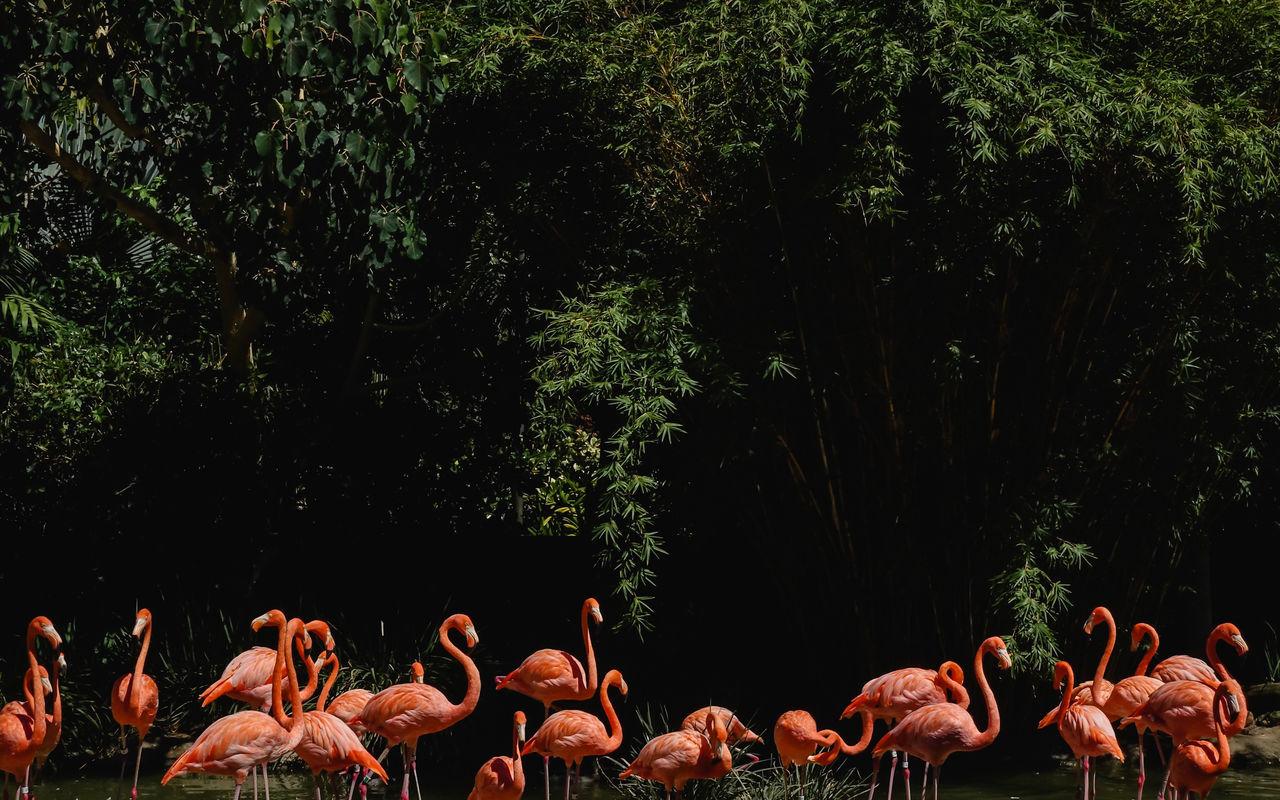 animal wildlife, animal themes, animal, vertebrate, plant