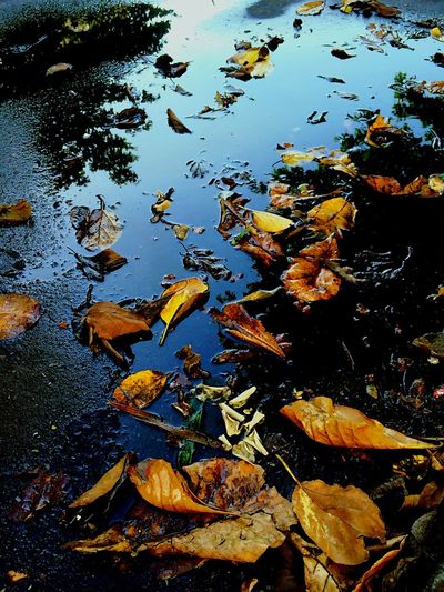 Leaves in autumn leaves