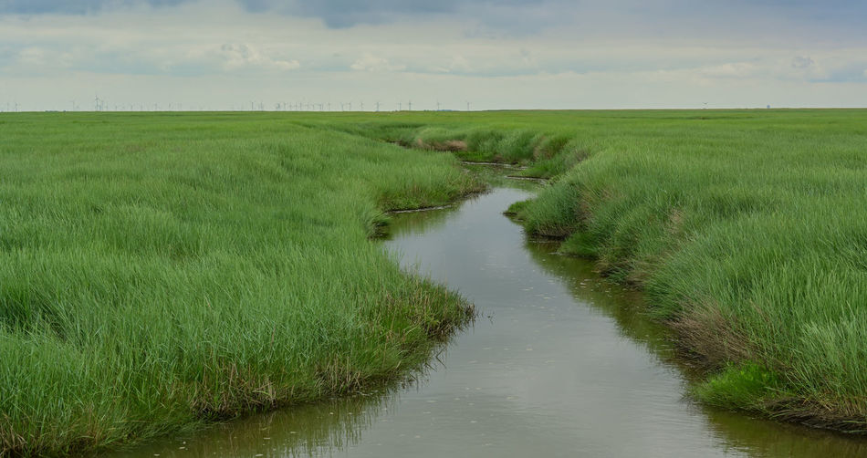 Scenic view of stream amidst field against sky