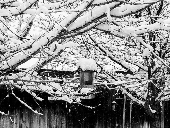 Birdfeeder Helpingoutthelittlebirds Winter Bird Winter Scene Bird Branch Tree Outdoors Nature Beauty In Nature
