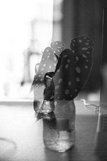 Close-up of ice cream in glass window