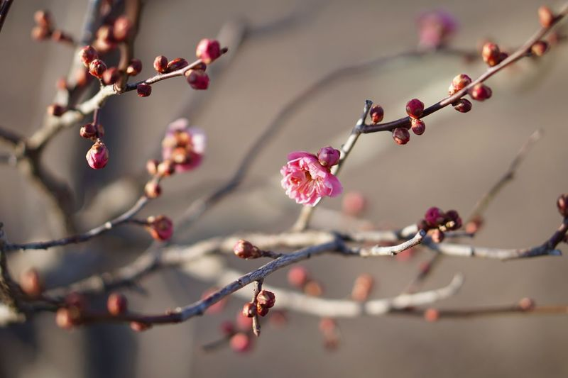 Morning Light Plant Growth Branch Tree Close-up Focus On Foreground Fragility Flowering Plant Freshness Flower Blossom Petal Nature