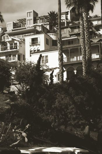 Catalina Island  Travel Photography Sepia Blackandwhite Photography Architecture Old Buildings Bed And Breakfasts Hello World