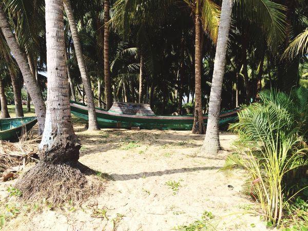 Everyday Lives Island Haynan Today's Photos Beautiful Nature Beautiful Day Fishing Boats My Island Beach Photography Palms Beach