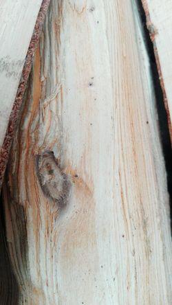 No People Close-up @WOLFZUACHiV Veronica Ionita Showcase: 2017 Ionita Veronica Eyeem Market Huaweiphotography Wolfzuachiv On Market Edited By @wolfzuachis Showcase: July Wolfzuachis Close Up Wooden Log Wood - Material Textured  Wood Wooden Wooden Texture Wooden Surface Log