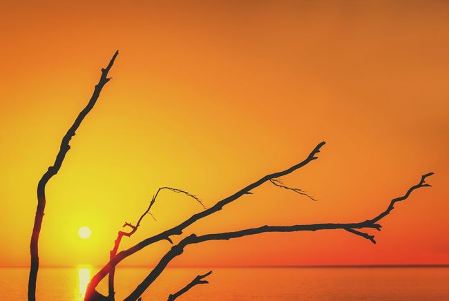 Baltic Sea Bare Tree Beauty In Nature Branch Close-up Day Landscape Nature No People Orange Sky Ostseeküste Outdoors Plant Sea Sea And Sky Silhouette Sky Sonnenuntergang Sunset Tranquility Tree Wood