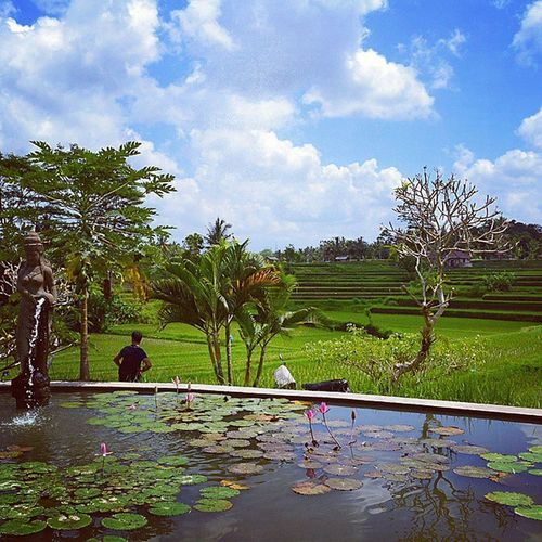 You can't get this view from a Cafe back home KarsaKafe CampuhanRidge Ricefields KoiPond Ubud Bali Travelling RTW Indonesia