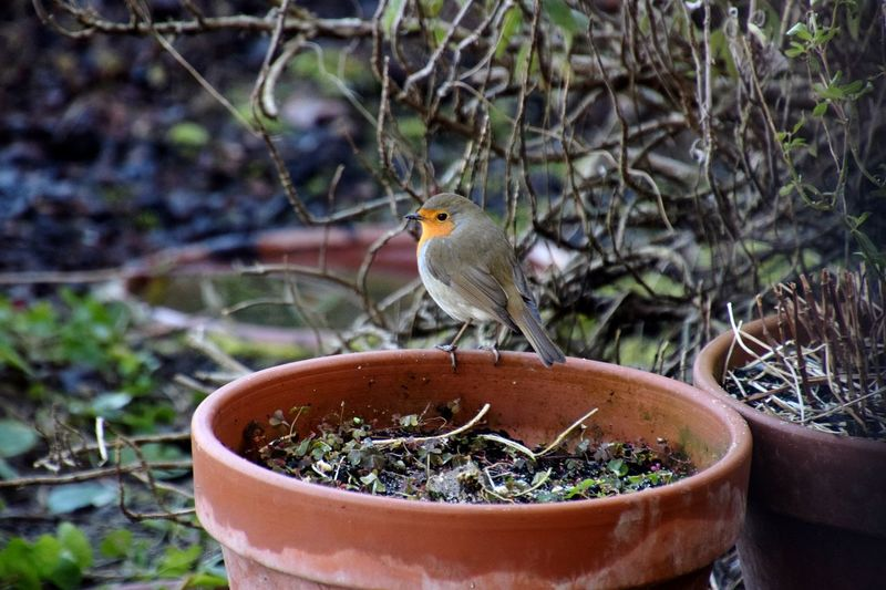Close-up of bird perching on potted plant