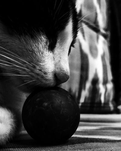 First Eyeem Photo Cat Catpic Photography Catphoto Cat Lovers Cat♡ Catsofinstagram Cats Of EyeEm Cats Catsoneyeem Cats Eyes Cats 🐱 Pet Portraits