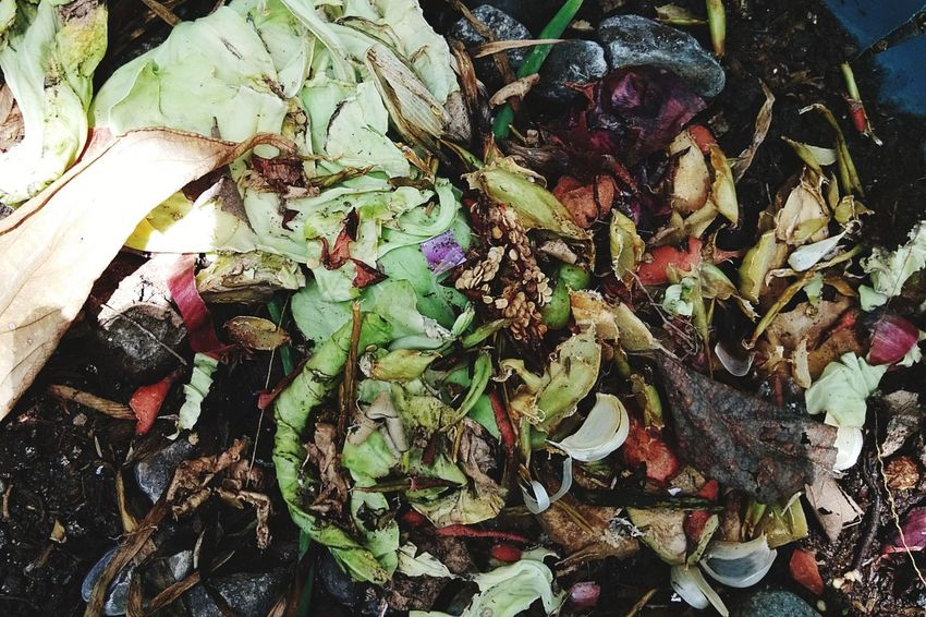 Composting food wastes Sustainability Greenliving Ecofriendly Leftovers Organic Gardening Organic Farming Composting Compost Pit Food Waste Food Composy Full Frame Leaf Close-up Wilted Petal Dried Leaves Wilted Plant