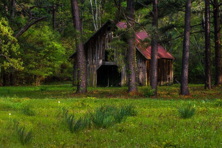 Tree Farm East