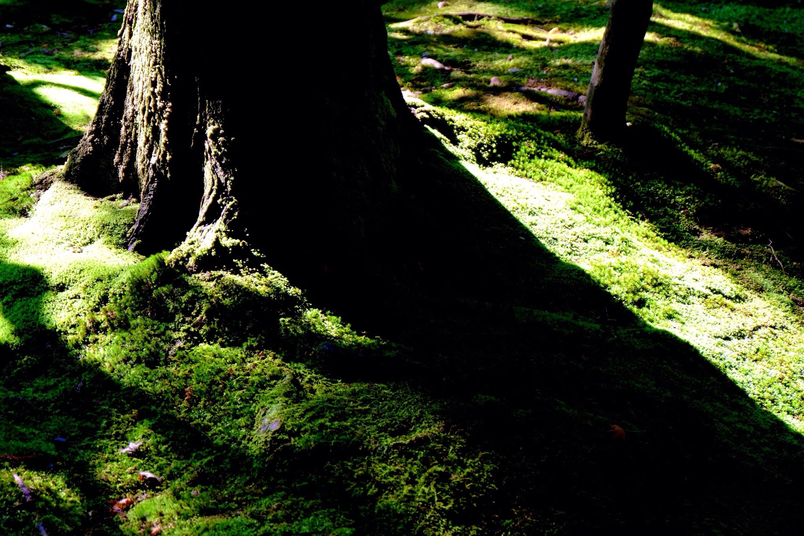 tree trunk, tree, grass, forest, tranquility, nature, growth, green color, tranquil scene, sunlight, shadow, field, moss, landscape, beauty in nature, woodland, scenics, outdoors, day, non-urban scene