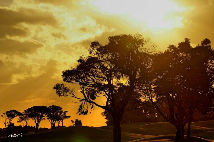 Sunset_collection Sunset Silhouettes From My Point Of View Light And Shadow EyeEm Nature Lover 夕焼けふぇち Hagging A Tree EyeEm Best Shots 光芒♡Love Kagoshima