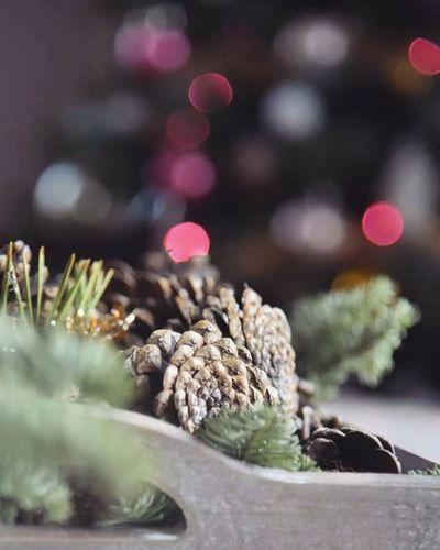 Natale  Christmastree Natale2017 Cristmastree Christmas Nikond750 Alberodinatale Home Casa Homemade Decorazioninatalizie Nikonitalia Homedecor Arredamento Followforfollow Natales Jinglebells Day