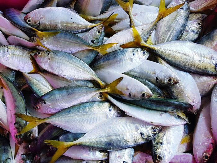 Close-up of fish for sale at market