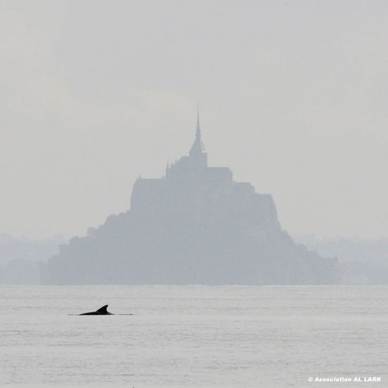 dauphin et Mont Saint Michel Dolphin Dauphin Le Mont-Saint-Michel Sea Outdoors Travel Architecture Silhouette Travel Destinations Fog Whale First Eyeem Photo