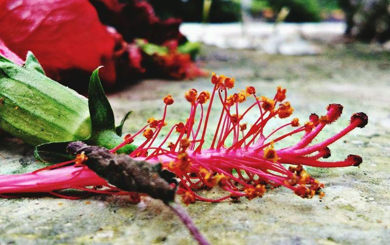 Flower UnderSea Sea Life Red Close-up Animal Themes Plant Petal Flower Head Pollen Stamen Pistil