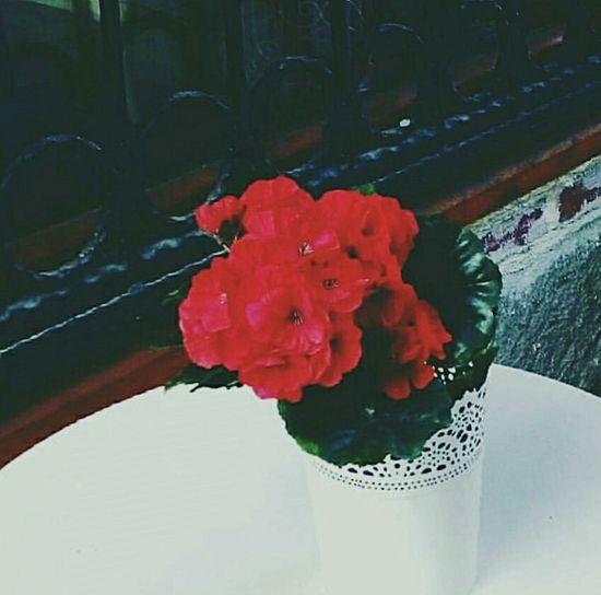 Enderun Kitapkafe Demirkapı çiçekler 🌸 çiçekleraçsın Notnatural Ankara/turkey Hamamönü Hamamonuhatirasi Nice Place EyeEm Gallery Sokakarası Ankarasokakları Turkeystagram Turkey💕 Artonthestreets