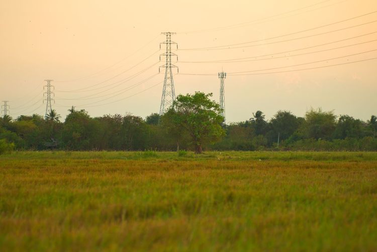 Landscape of rice field with selective focus on tree in the center and high voltage towers in background in the sunset sky High Voltage Tree Sunrise Sunset Twilight Grass Farm Rice Field Tower Electricity  Sky Plant Electricity Pylon Technology Power Supply Cable Field Power Line  Sunset Land Fuel And Power Generation Landscape Nature Environment Agriculture No People Growth Beauty In Nature Tranquility