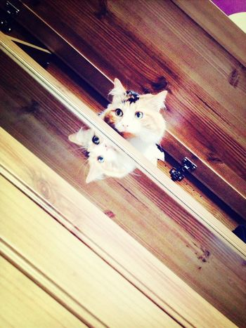 Catsnap Pets Reflections