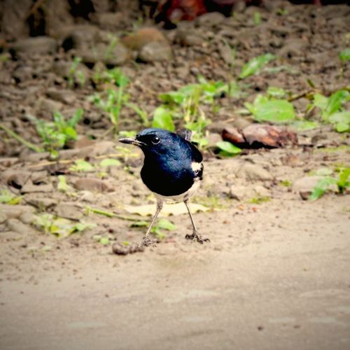 Bird Birds Birdsofinstagram Birdwatching Nature ..