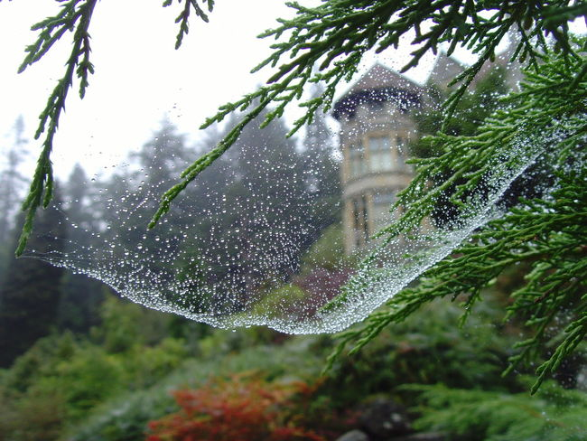 Beauty In Nature Close-up Cragside Day Dew Drop Falling Focus On Foreground Fragility Growth Motion National Trust Nature No People Outdoors Plant Season  Selective Focus Spiders Web Tree Water Weather