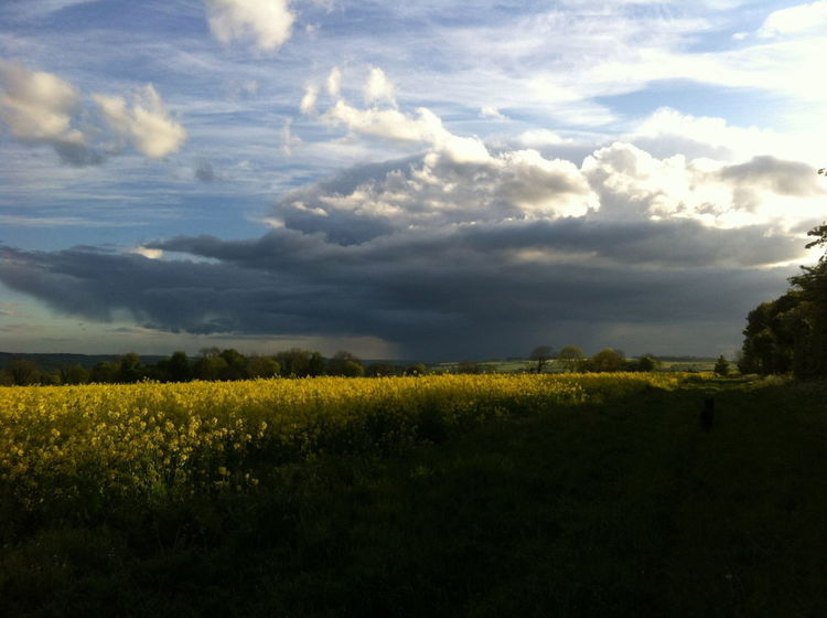 Threatening Clouds over Crop Fields Beauty In Nature Blue Sky And Clouds Cloud Cloud - Sky Cropped Dusk Dusk Sky Evening Farm Field Farmland Horizon Over Land Idyllic Landscape Nature No People Non-urban Scene Outdoors Rural Scene Scenics Sky The Cotswolds Tranquil Scene Tranquility Yellow