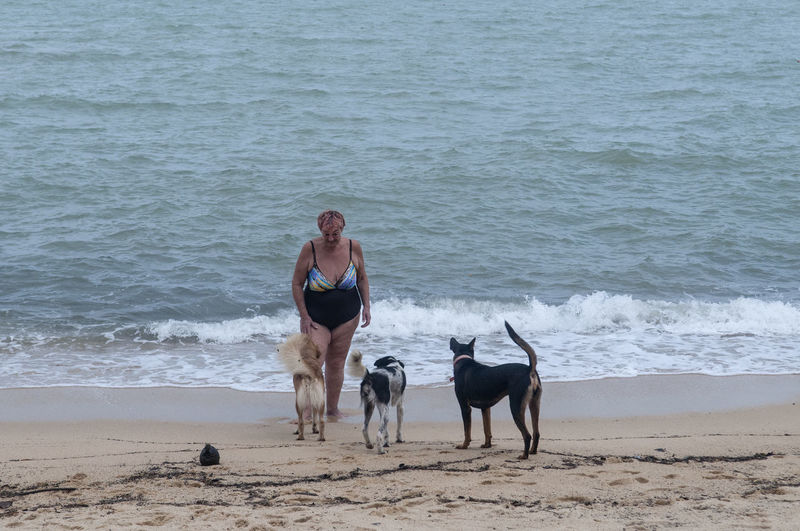 Pets Mammal Animal Themes Sea Beach Animal Land Canine Vertebrate Water Real People Lifestyles Sand Leisure Activity Day Outdoors Pet Owner Beach Dog Dogs Beach Life Beach Lifestyle Thailand Elderly Woman