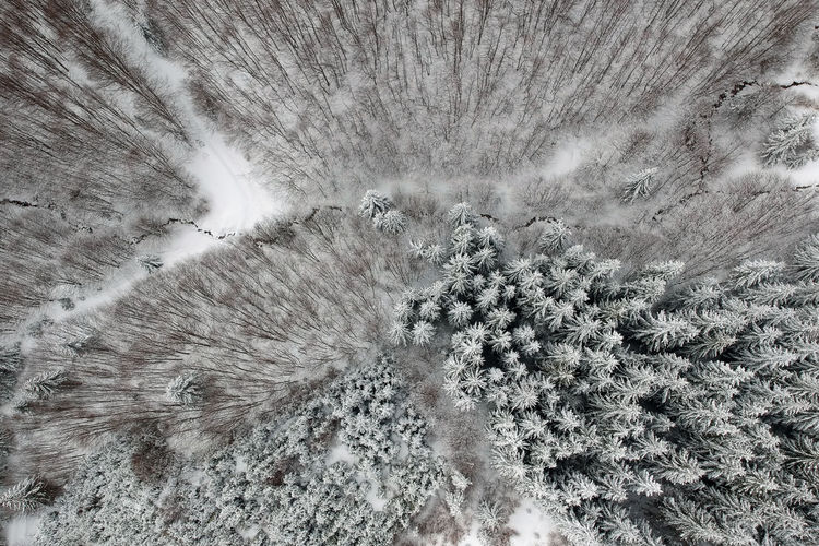 Aerial View Of Snow Covered Forest